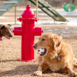Dog Park | Fire Hydrant