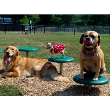Dog Park | Stepping Discs