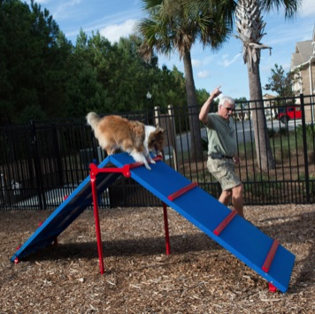 Dog Park Ladder | 400