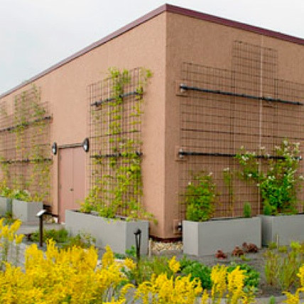 Exterior Plant Wall