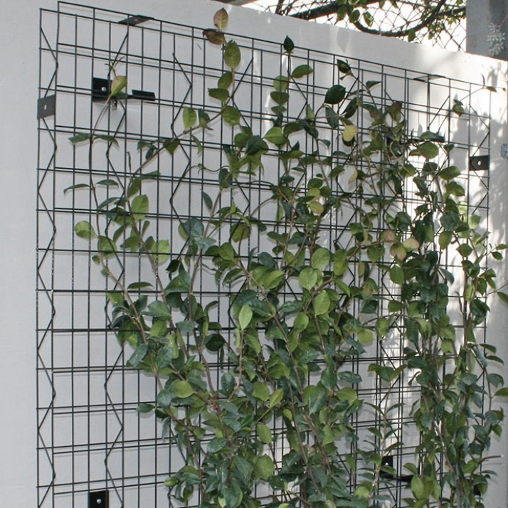 Green Wall | Trellis Grid